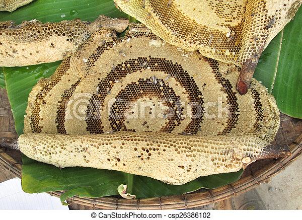 Honeycomb - csp26386102