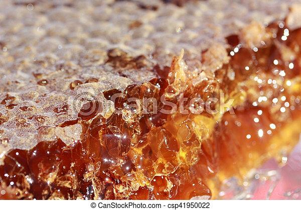 Honeycomb - csp41950022