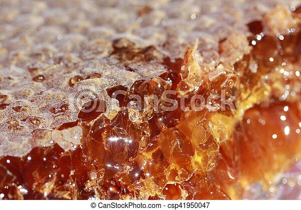 Honeycomb - csp41950047