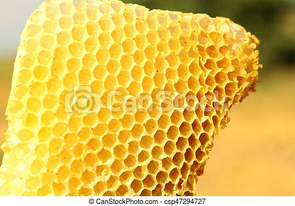 Honeycomb - csp47294727