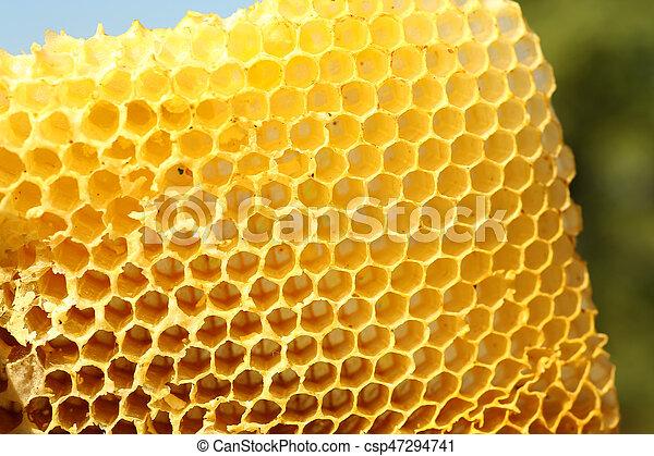 Honeycomb - csp47294741