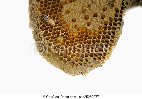 Honeycomb - csp25262077