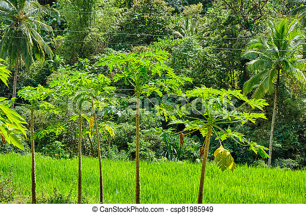 panay, 野生, 森林, フィリピン。, 島 - csp81985949