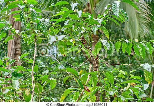 panay, 野生, 森林, フィリピン。, 島 - csp81986011