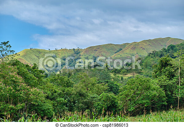 panay, 野生, 森林, フィリピン。, 島 - csp81986013