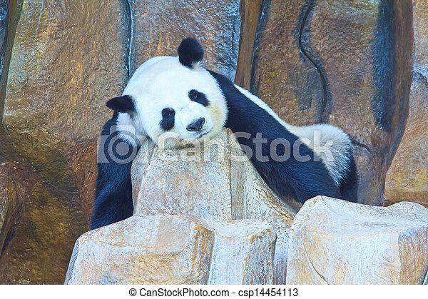 Panda bear - csp14454113