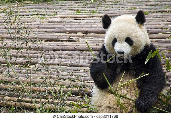 panda - csp3211768