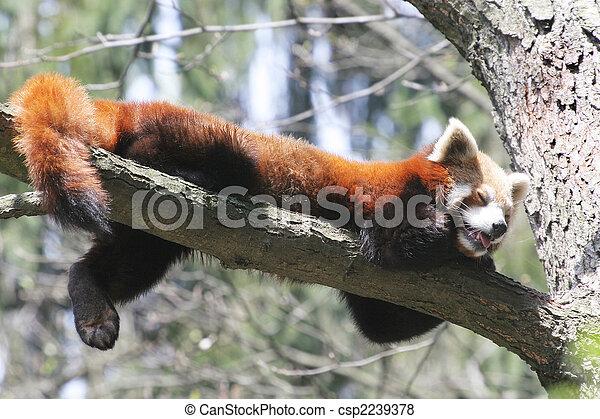 panda, rouges - csp2239378