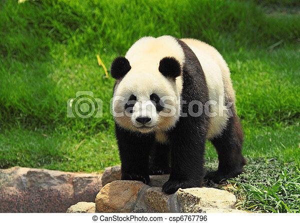 panda - csp6767796