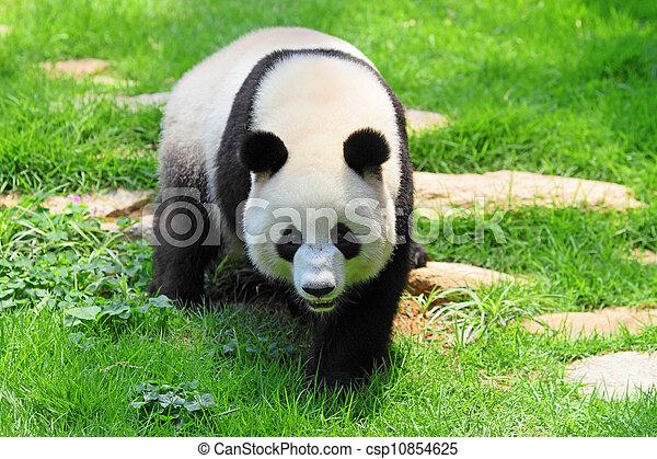 panda - csp10854625