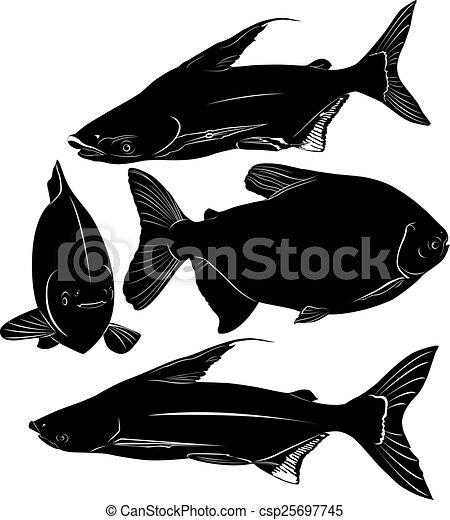 pangasius, colossoma, fish - csp25697745