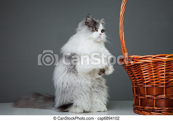 panier chat persan