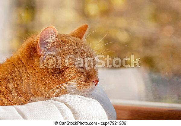 Panier Fenêtre Chat Rouges Dormir