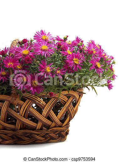 panier, fleurs blanches, fond - csp9753594