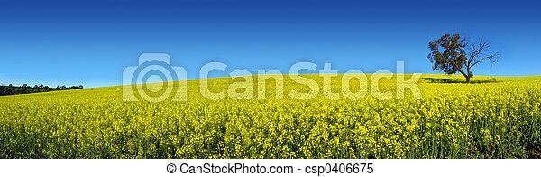 panorámico, canola - csp0406675