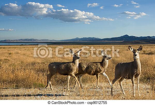panorâmico, veado, paisagem, mula - csp9012755