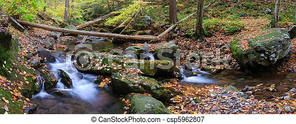 panorama, gałęzie, zatoczka, drzewo las - csp5962807