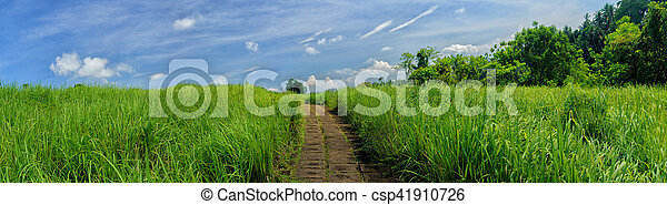 Panorama image of beauty sunny day on the rice field - csp41910726