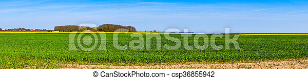 Panorama landscape with a canola field - csp36855942