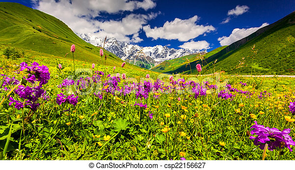 Panorama of alpine meadows in the Caucasus mountains. Upper Svan - csp22156627