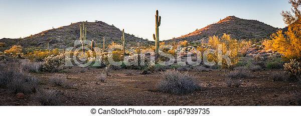 Panorama of the Desert Landscape of Arizona - csp67939735