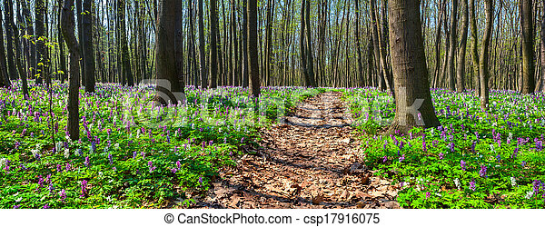 Panorama of the spring forest. - csp17916075