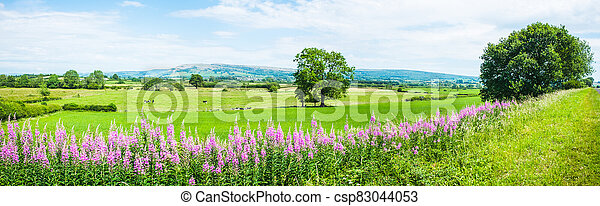 Panorama of Willowherb and fields on a summer day - csp83044053