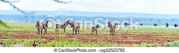 panorama, parc, zèbres, safari - csp52523782