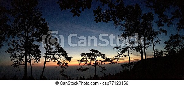 Panorama view silhouette of pine trees with sunset light and blue sky - csp77120156