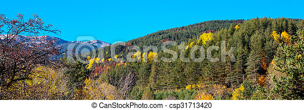 Panorama with Trees Autumn Colors, green, yellow, red in the mountains - csp31713420