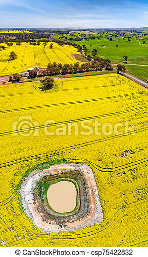 Panoramic aerial views of canola and grazing fields in rural Australia - csp75422832