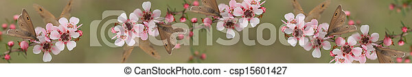 Panoramic Australiana banner butterfly and leptospernum flowers of Australia - csp15601427