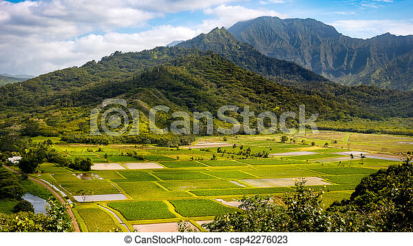Panoramic landscape view of Hanalei valley and green taro fields, Kauai - csp42276023