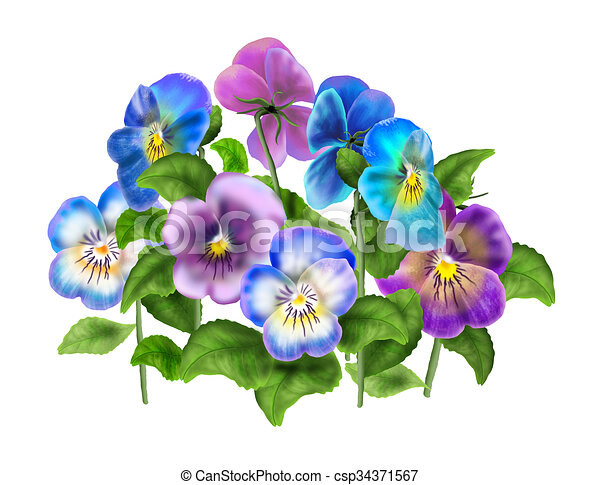 Pansies Viola Flower Isolated Beautiful Light Blue And Violet