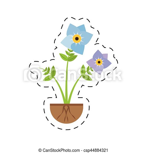 pansy flower spring growing - csp44884321