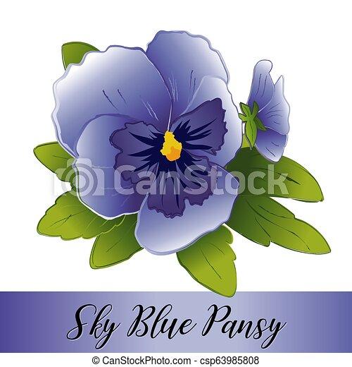 Pansy Flowers, Sky Blue - csp63985808