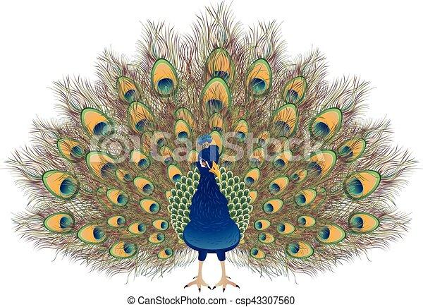 Paon dessin anim portrait paon feathers dessin - Dessin de paon ...