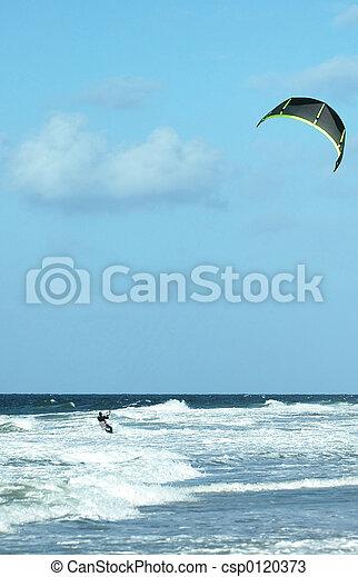 papagaio, surfer1 - csp0120373