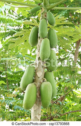papaya on the tree - csp13793868