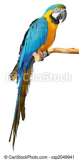 papegaai - csp2049941