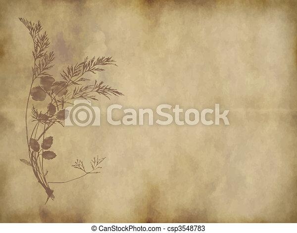 Papel viejo o pergamino - csp3548783