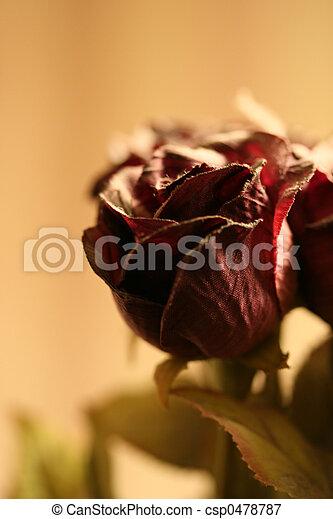 Paper Rose - csp0478787