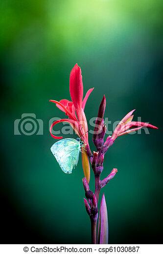 papillon, canna, fleur, rouges - csp61030887