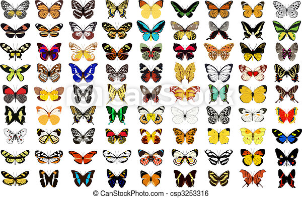 papillon - csp3253316