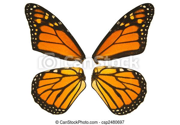 Aile De Papillon Dessin papillon, monarque, ailes. papillon, haut, fond, fin, monarque