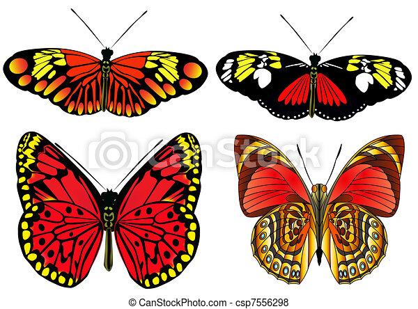 Der Kit Schmetterling ist auf weiß isoliert - csp7556298
