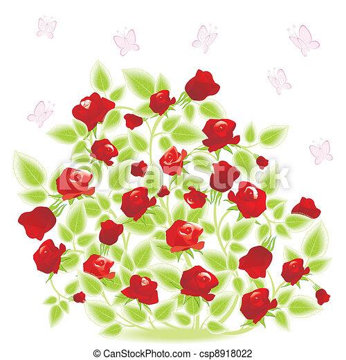 Rosenstrauch mit Schmetterling - csp8918022