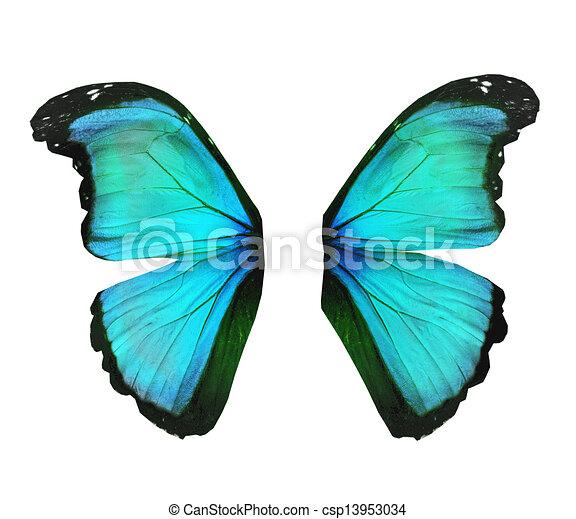 Aile De Papillon Dessin papillon, turquoise, isolé, morpho, blanc, ailes.