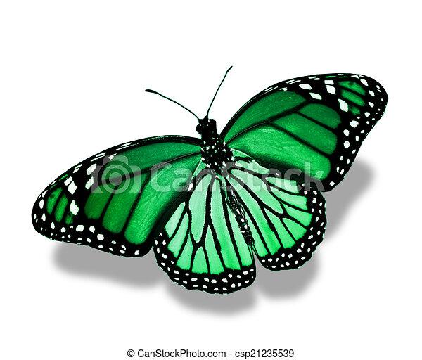 Papillon vert papillon blanc vert isol - Papillon dessin couleur ...