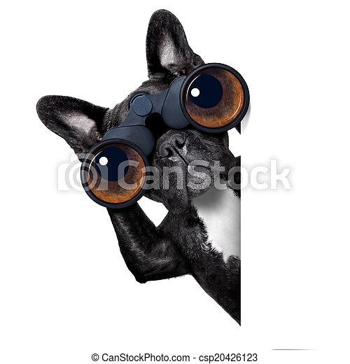 par, chien, jumelles, regarder - csp20426123